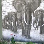 Heiko Klohn | Elefanten